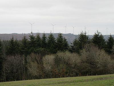 windraeder-mehringer-wald